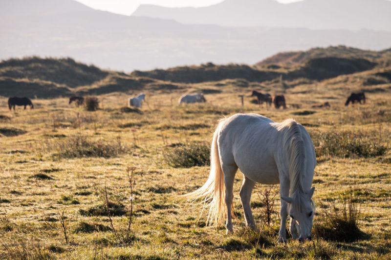 Horse grazing on land