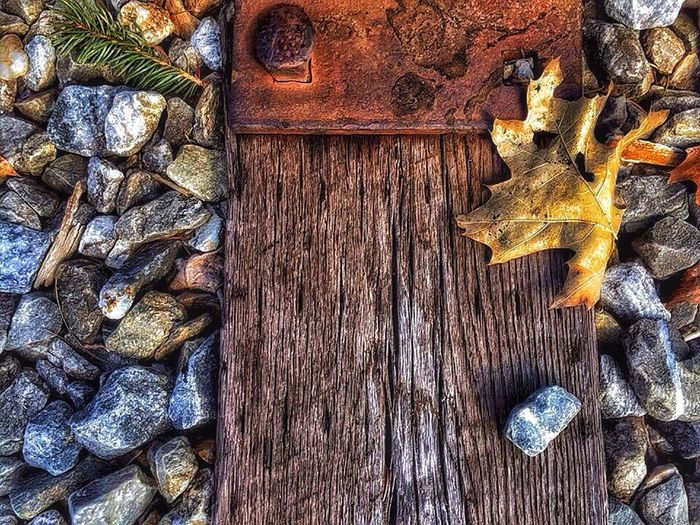 It's Fall Railroad Track Leaf 🍂 CarolSharkeyPhotography Maine