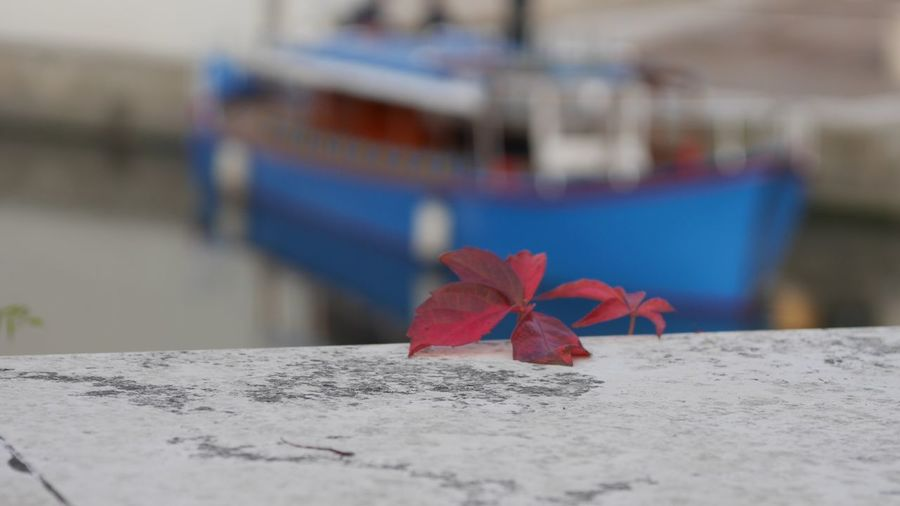 EyeEm Selects Red Focus On Foreground Selective Focus Close-up No People Flower Nature Flowering Plant Outdoors Beauty In Nature Water Day Nautical Vessel