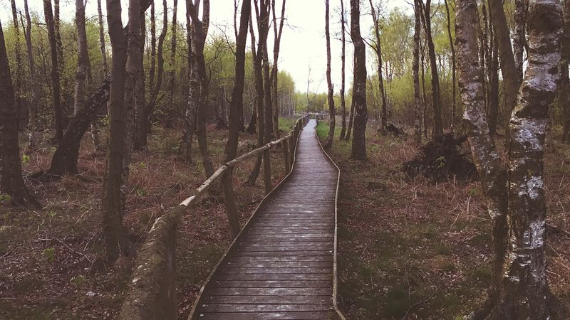 The way in to the forest Tree Nature Forest Outdoors No People The Way Forward Tree Trunk Landscape Travel Destinations Pathway Path Deep Forrest Hiking Travel Woods Mood