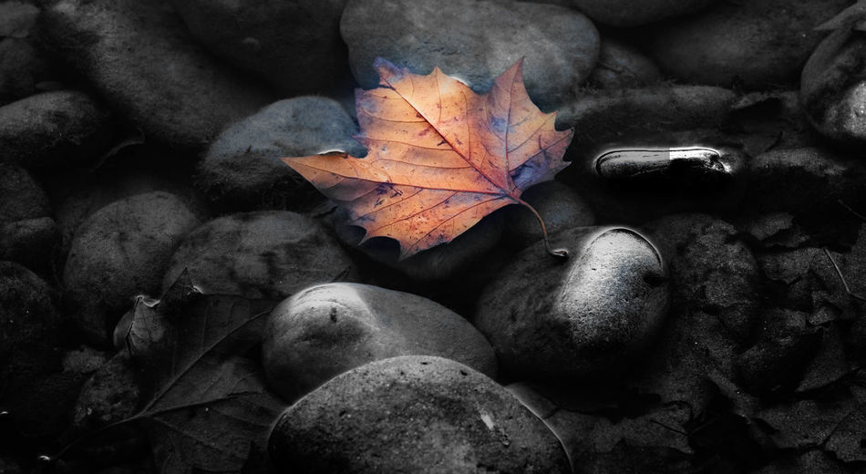 Passing Leaf