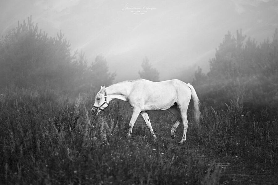 Mammal Animal Themes Grass Nature Horse Field Pasture Sky Landscape Livestock One Animal Black Background Horse Riding Equine Travel Photographer Monochrome Photography Beauty In Nature Horse Photography  Equine Photography Pets Nature