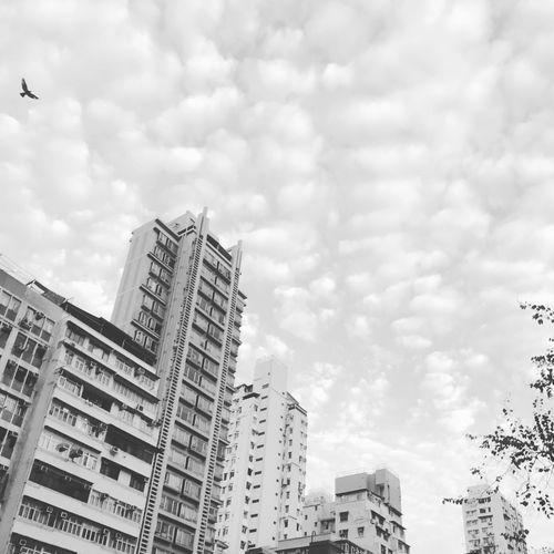 乱入的🦅 Cloud - Sky