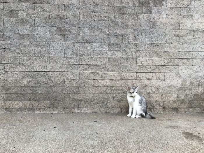 Architecture Built Structure Cat Day Domestic Domestic Animals Domestic Cat Feline Mammal No People One Animal Pets Relaxation Sitting Stone Wall Vertebrate Wall Wall - Building Feature Whisker