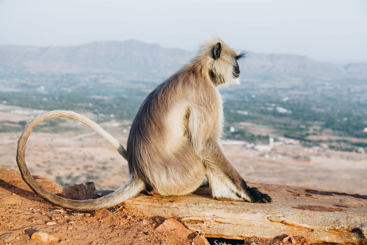 Side view of monkey