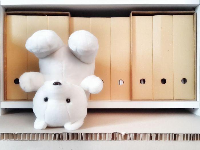 Teddy bear against files shelf