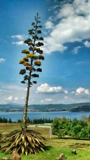 Relaxing Tree Tree And Sky Treecollection Landscape Landscape_photography Landscapes Zirahuen Michoacan, México Michoacan Mexico Mexico De Mis Amores Mexicolors Mexico_maravilloso