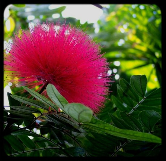 Pink Flower Exotic Pretty