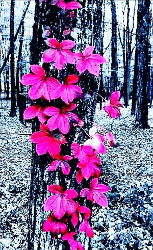 Flower Nature Petal Beauty In Nature Growth Pink Color No People Plant Outdoors Tree Day Close-up Fragility Blooming Flower Head Freshness