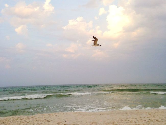 Oh to fly free o're the waves, as the gulls by the shore.💙🌊 Ocean Mermaid Sealovers Sea Sea And Sky