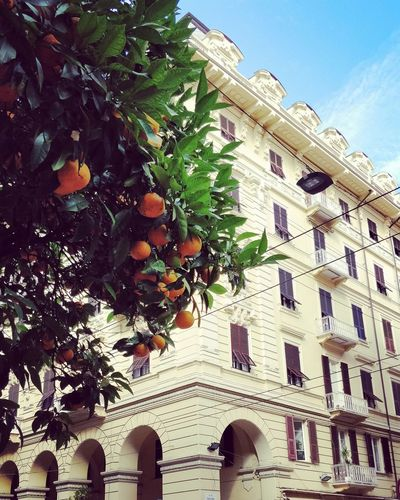 Orange Orangetree Tree House Architecture Italy Laspezia Nature