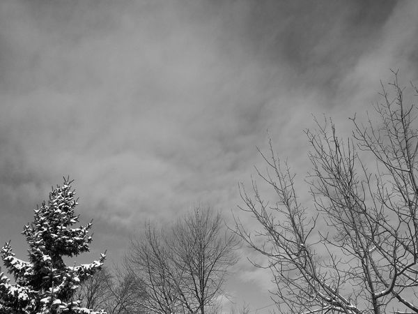 Today, I looked up at the sky and it was blue. Shades Of Grey Blue Sky Hello Friends Tree Cloud - Sky No People Sky Nature Low Angle View Outdoors Storm Cloud Day Beauty In Nature Winter