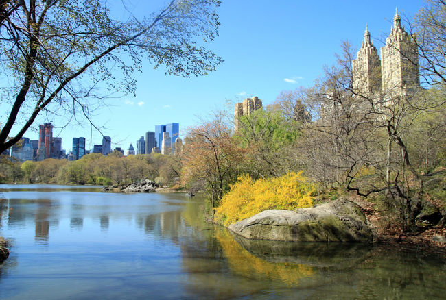 Beauty In Nature Blue Sky Central Park Day New York City Reflection Spring In The City Yellow Color Yellow Flower Neighborhood Map