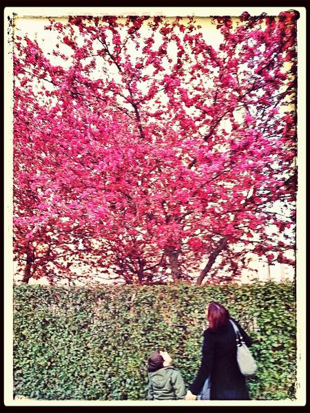 What Does Peace Look Like To You? Me And My Son Beautiful Spring Tree