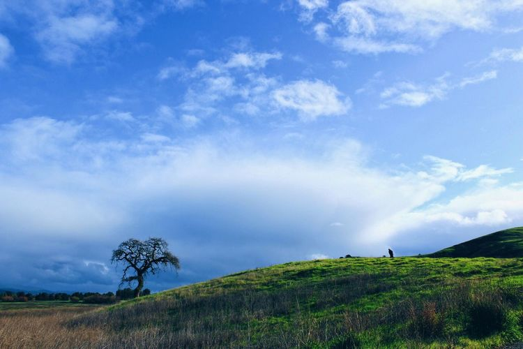 the little walk off trail to get to the spot for the picture. Landscape Tree On A Hill Clouds Greenery California San Jose, Ca Hiking Share Your Adventure The Great Outdoors - 2015 EyeEm Awards EyeEm Gallery Eye4photography  EyeEm Best Edits EyeEm Best Shots Vscocam Vscogood