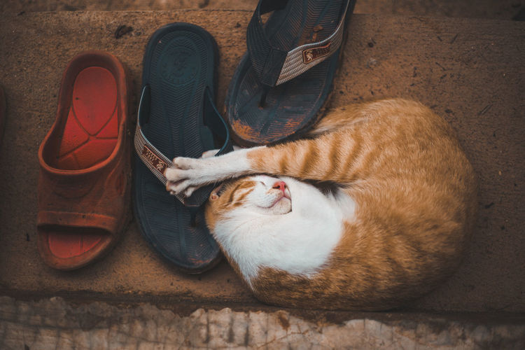 Pets Domestic Domestic Animals Mammal Animal Themes Animal Cat One Animal Vertebrate Domestic Cat Feline Relaxation Shoe No People Indoors  Resting High Angle View Sleeping Flooring Eyes Closed  Whisker Eyeem 5 2019