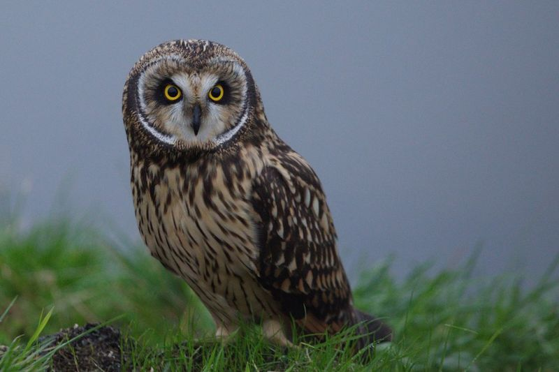 Portrait of owl perching on field