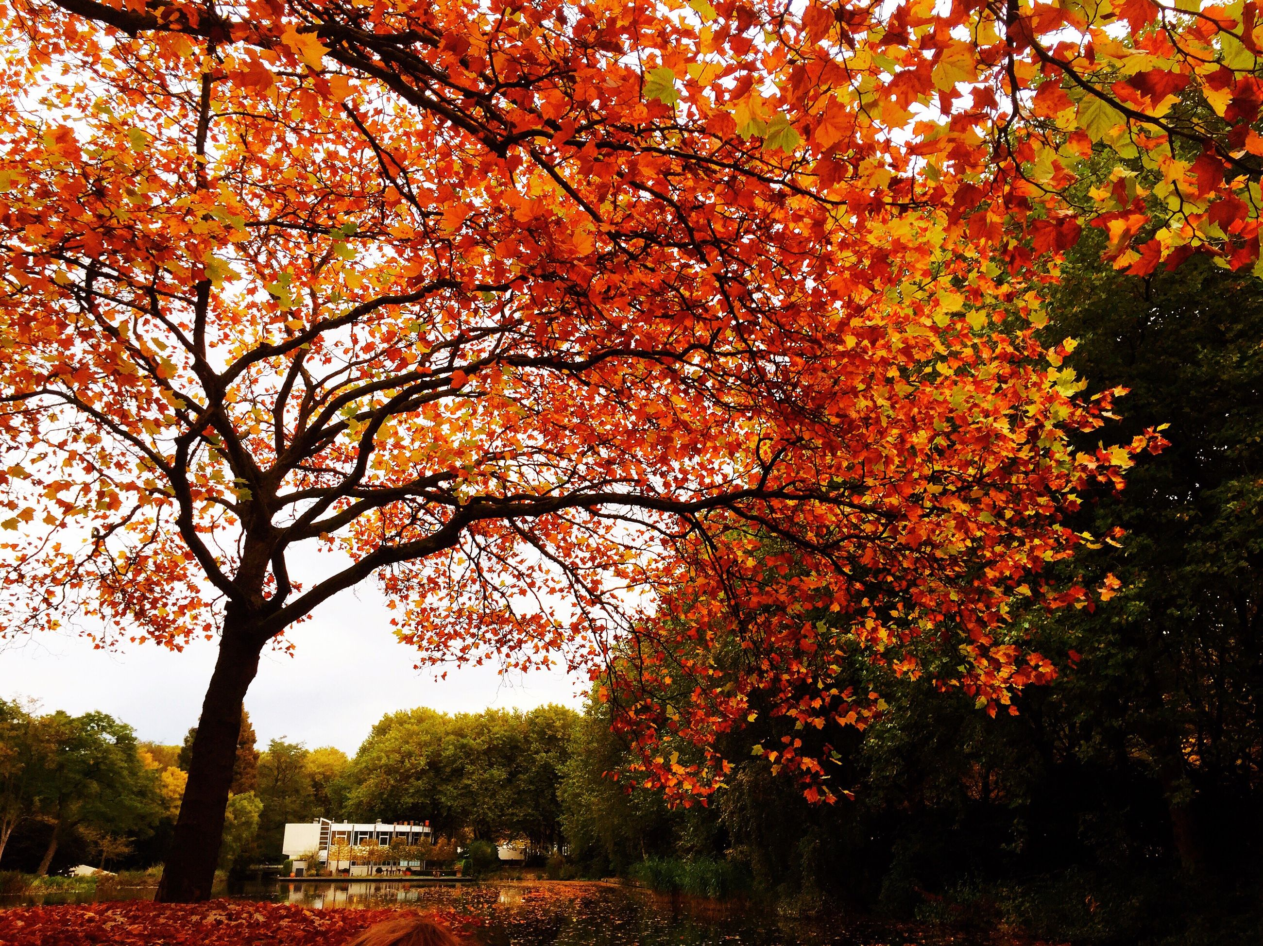 tree, orange color, nature, change, autumn, branch, beauty in nature, no people, growth, outdoors, day, scenics