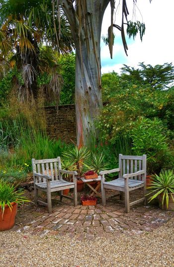 Athelhampton House and Garden Athelhampton House Beauty In Nature Chair Day Front Or Back Yard Garden Grass Growth Nature No People Outdoors Plant Relaxation Seat Tranquility Tree Tree Trunk Wood - Material