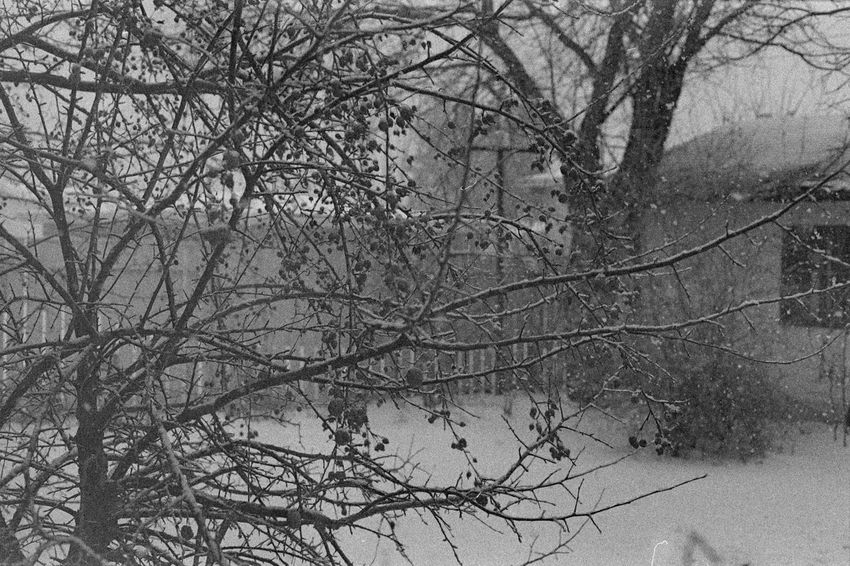35mm Film Analogue Photography Bare Tree Beauty In Nature Black & White Black And White Blackandwhite Bleak Branch Caffenol Cold Temperature Day Film Nature No People Outdoors Sky Snow Snowfall Tranquility Tree Winter Winter Is Coming
