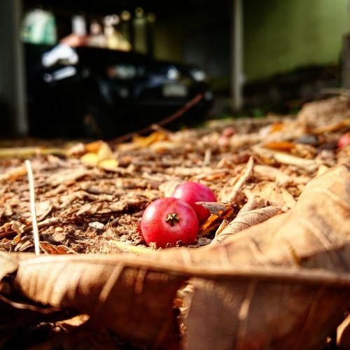 Fruit Leaf Red