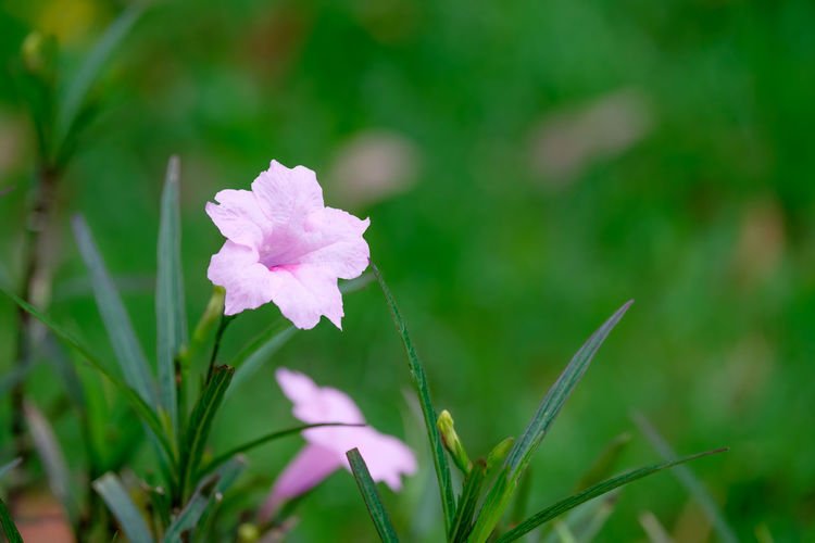 Beauty In Nature Blooming Close-up Day Flower Flower Head Focus On Foreground Fragility Freshness Green Color Growth Nature No People Outdoors Petal Plant