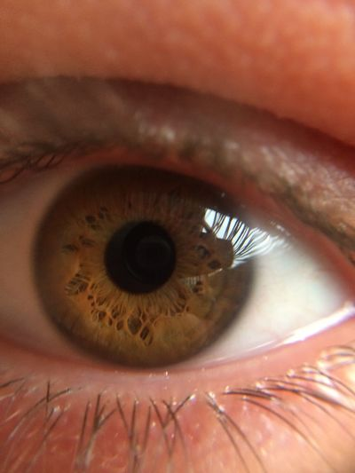 Close-up of brown eye of person