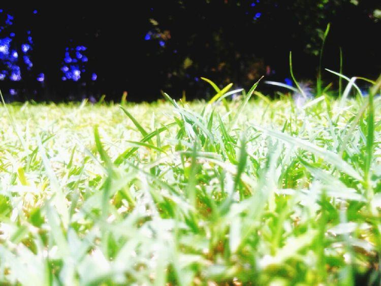 Green Grass Grassland Relaxing Green Frankpancorbo