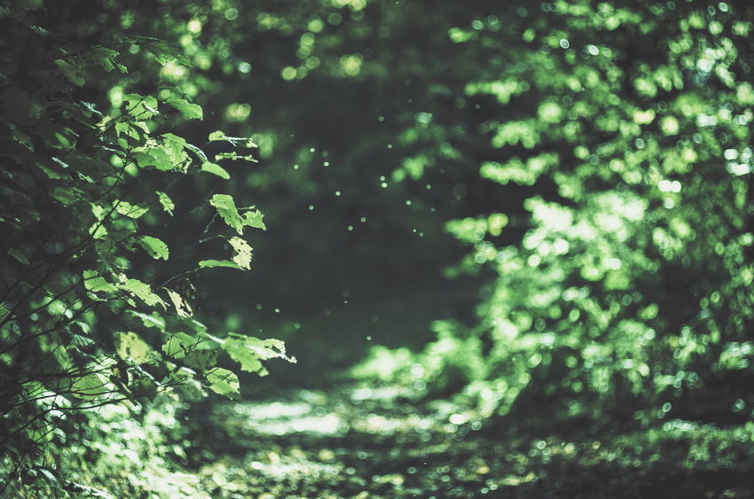 Autumn🍁🍁🍁 Autumn EyeEm Nature Lover EyeEm Best Shots - Nature Bokeh Photography Bokeh Lights Bokehlicious Pentax Sunlight Nature Photography Beautiful Nature Klaquax@home