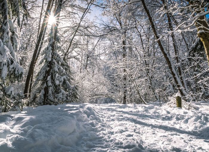 #beautifulbc #firstsnowfall #sunbur #supernaturalBC Beauty In Nature Cold Temperature Day Nature No People Outdoors Scenics Snow Tranquil Scene Tranquility Tree Weather Winter
