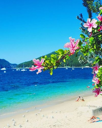 If i had a flower for every time i thought of you, I'd have no flowers. Pickuplines Flower Beach