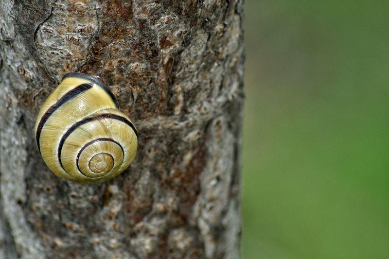 Snail Tree