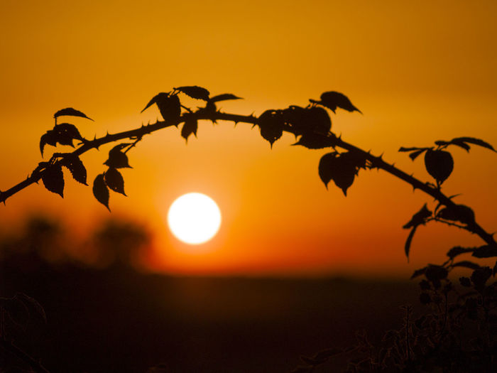 Landscape_Collection Pasture Red Sunlight Sunset Silhouettes Sunset_collection Beauty In Nature Countryside Dehesa Environment Horizon Landscape Nature Orange Color Rual Rural Life Rural Scene Scenery Scenics Sky Sun Sunbeam Sunset Tranquility Warm Colors