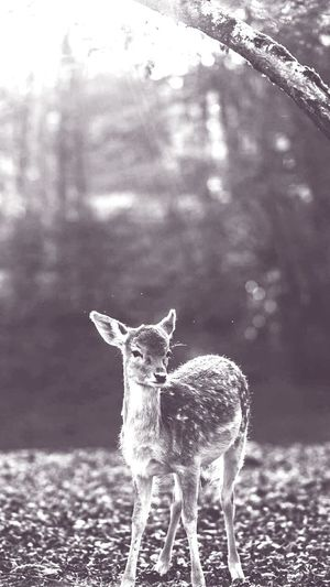 Los animales somos seres tranquilos si nos nos molestan no pasara nada. One Animal Nature Animal Themes Animal Looking At Camera Deer Full Length Portrait No People Tree Outdoors Day Mammal Antler First Eyeem Photo