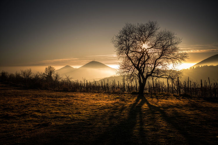 Euganean HIlls Euganean Hills Landscape_Collection Beauty In Nature Euganei Landscape Landscape_lovers Landscape_photography Landscapes Mountains Nature No People Outdoors Scenics Silhouette Sunset Tranquil Scene Tranquility Tree