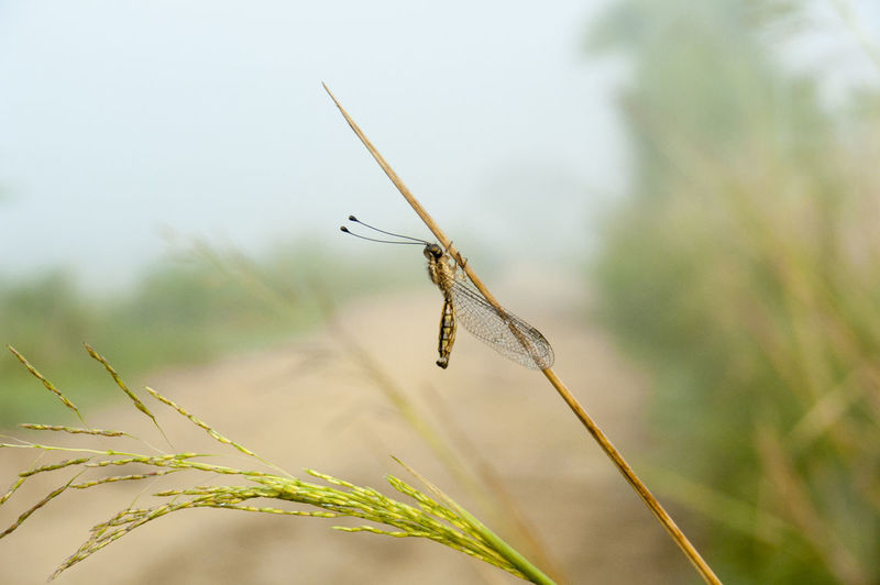 damselfy Beauty In Nature Close-up Damselfly Insect Morning Nature No People Outdoors Plant