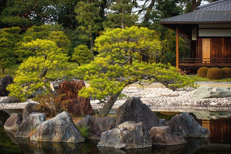 Japanese garden Japan Kyoto Plant Tree Growth Formal Garden Garden Nature Green Color No People Architecture Day Built Structure Beauty In Nature Rock Solid Tranquility Japanese Garden Rock - Object Building Sunlight Outdoors