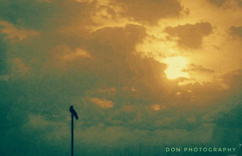 Birdalone Evening Sky Solitude Outdoors Banglore Mobilephotography