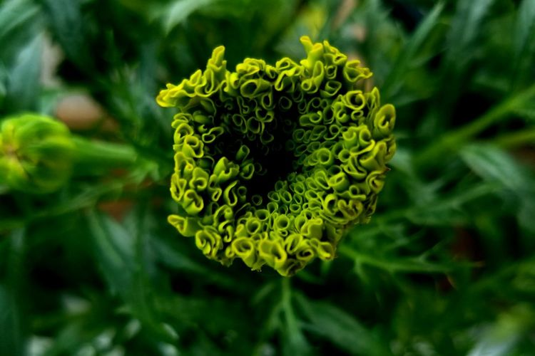 Green Color Nature Plant Plant Part Outdoor Pursuit Botany Beauty In Nature Close-up