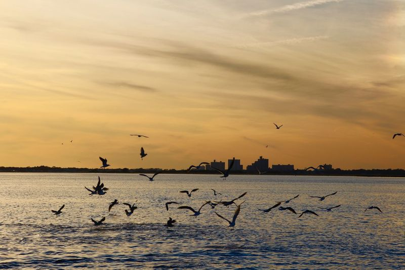 Animal Themes Flock Of Birds at sunset Flying Mid-air Spread Wings Large Group Of Animals Over Water dramatic sky