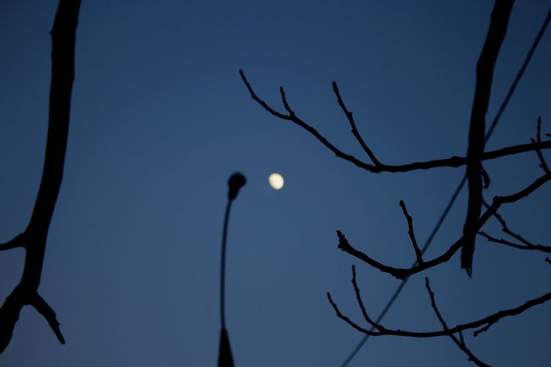 Full Moon Windy Day Branches And Sky Great Day Out Bluesky Blurry Hello Martians