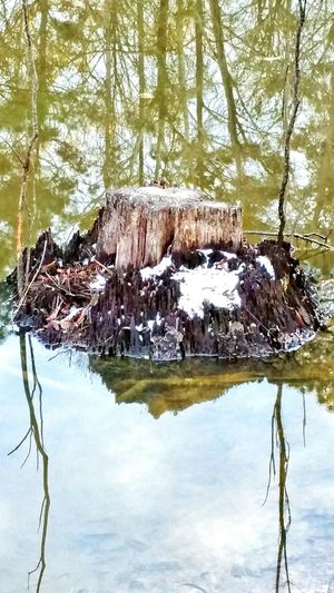 Nature Tree Water Tranquility No People Outdoors Beauty In Nature Scenics Day Tranquil Scene Growth Forest Sky Snow Water Surface Rare Snow Mississippi Tree Reflections Reflection Dead Tree Log Snow On Trees Log In Water Snowfall Water Reflections Green Color