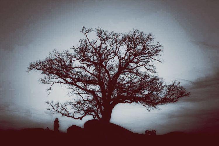 Gettysburg Battlefield Tree Gettysburg Gettysburg National Military Park Gettysburg Pennsylvania Battlefield