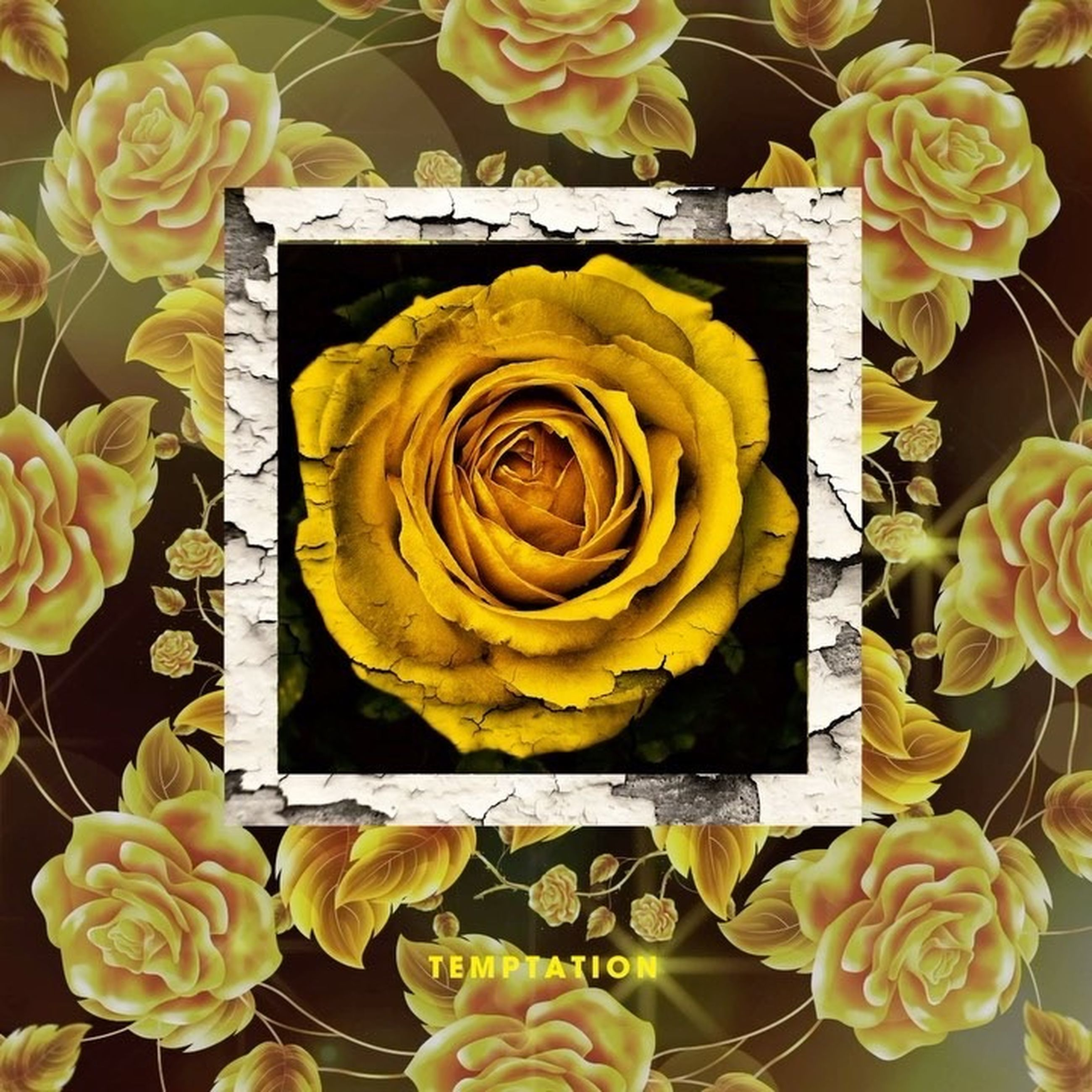 flower, flowering plant, plant, beauty in nature, rose, freshness, petal, rose - flower, vulnerability, flower head, inflorescence, fragility, close-up, yellow, flower arrangement, nature, bouquet, no people, directly above, indoors, digital composite