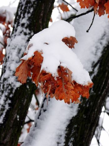 Snow ❄ Snowing Nature Tree