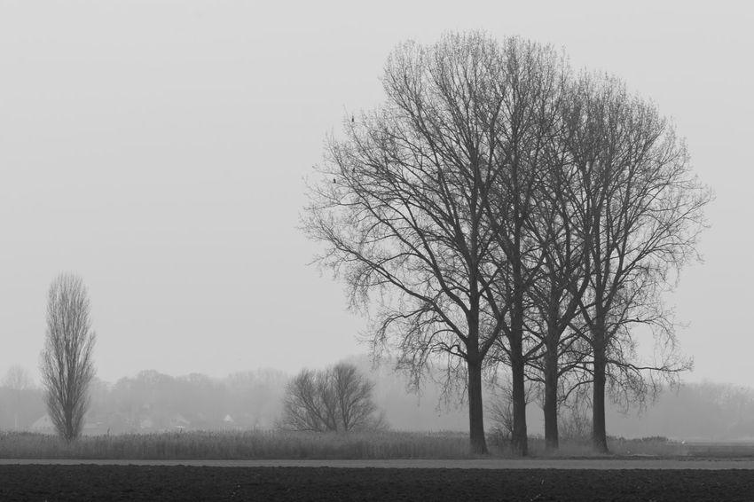 Near Rode Sluis Sony A700 EyeEm Market © Getty Images EyeEm Premium Collection Black And White Branch Foggy Isolated Landscape Nature The Netherlands Tree Zeeland  Zeeuws Vlaanderen