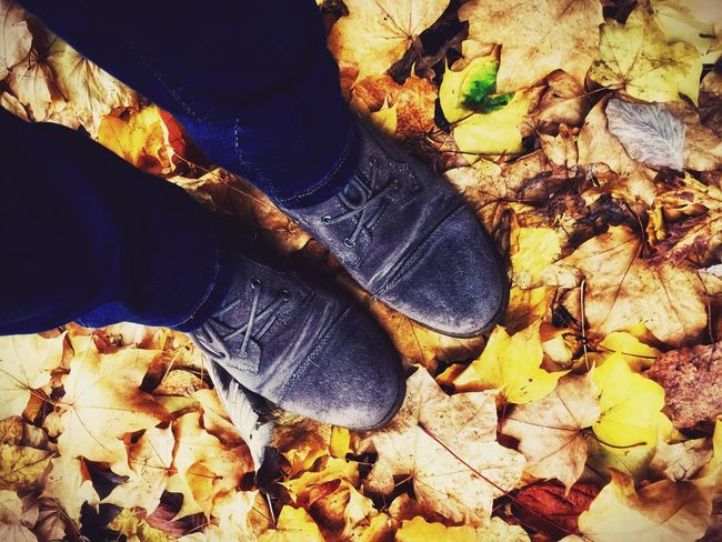 Beauty is all around; even on the ground! Autumn Colors Nature Maple Leaf Leaf Fallen Leaves Only Leaves Autumn Fragility Beauty In Nature Looking Down Abundance Leaves On The Ground Feet On The Ground Feet Boots Boots And Jeans Human Body Part Legs And Shoes Faded Dreaming Seasons