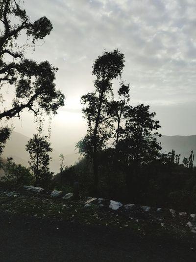 Beautiful Sunset 🌇 Black And White Oneplus Oneplus6 Lowlight Awesomely Creative Moody EyeEm EyeEmAwards Market India Krvishaljha Oneplusphotograpgy Tree Forest Tree Area Silhouette Sky Cloud - Sky
