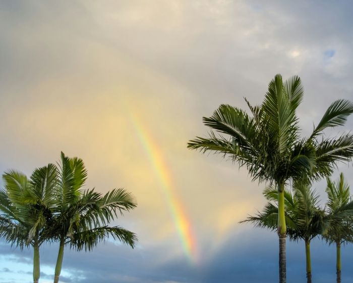Rainbow Australia Palm Trees Stillness In Time Wonder Of Nature Explore Nature Gold Coast Coconut Trees Australia & Travel WeatherPro: Your Perfect Weather Shot Sky And Clouds Magic Sky Sunset Summer Memories... Summer Memories 🌄 My Eyes My Australia My Eyes My Nature