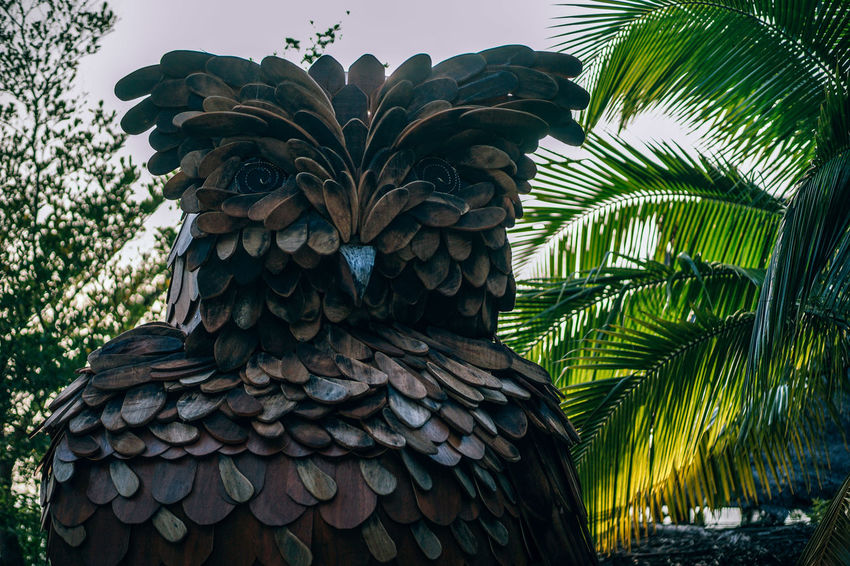 Mighty wooden Owl statue standing at the entrance of a Luxury Resort at Koh Phangan. Low angle view. The background is the sky and green garden trees. Figure Green Natural Ornament Statue Textured  Wisdom Wood Art Bird Brown Carved Decoration Decorative Figurine  Handicraft Old Owl Owls Sculpture Statues Symbol Vintage Wild Wooden